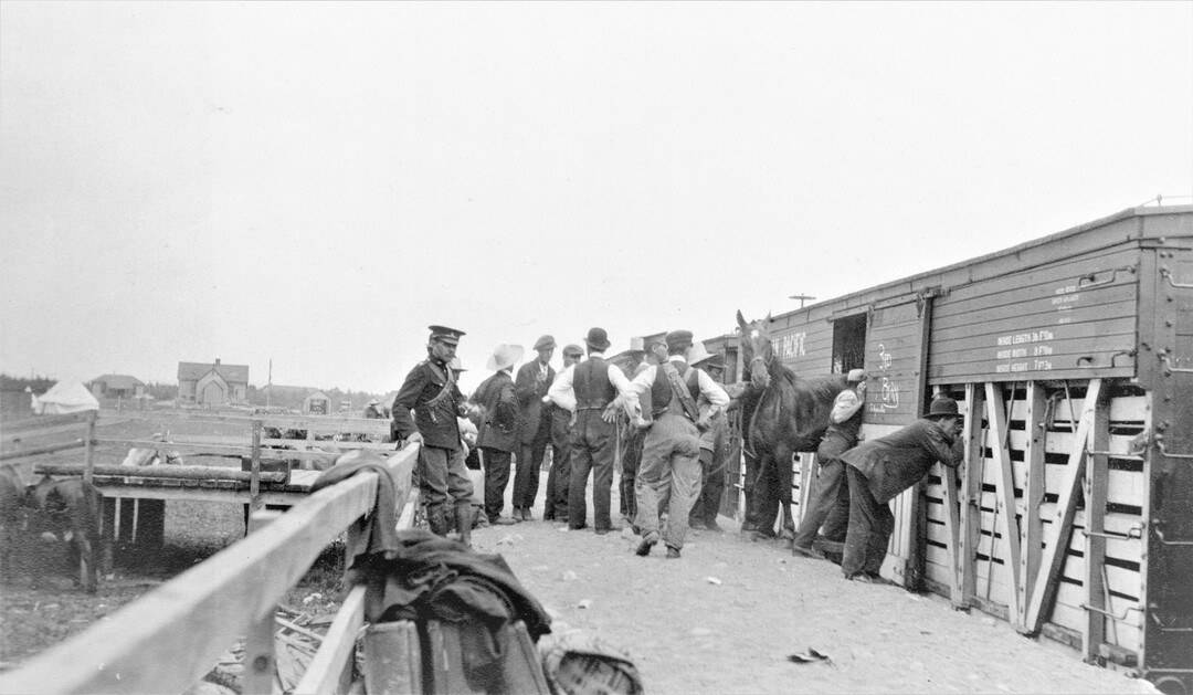 2.-1914-August-Loading-the-Horses